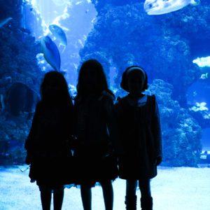 Akvarium